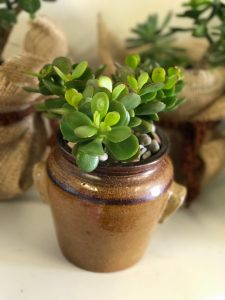 succulents_for_sale_breast_cancer_charity_zillmere